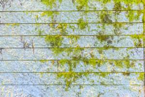 藻が発生している外壁の画像